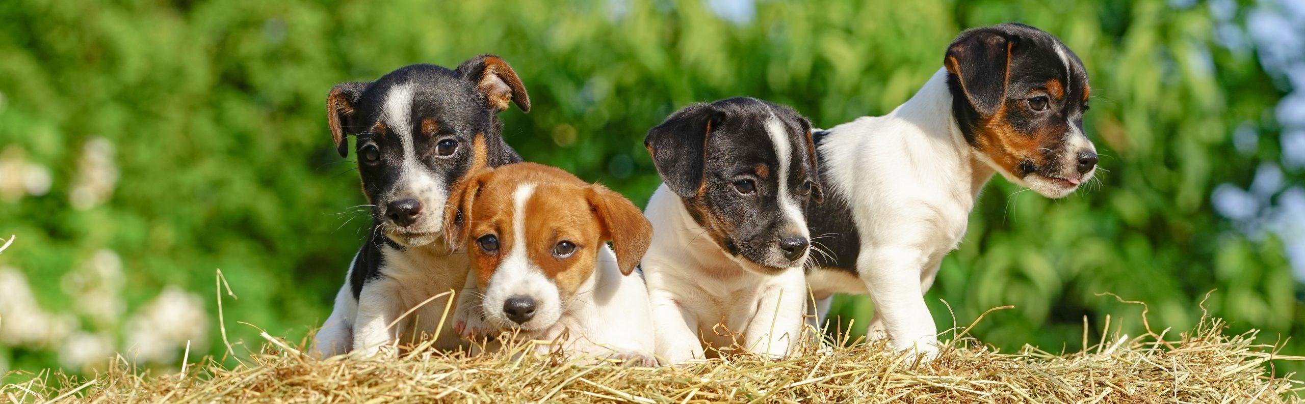 Pup in huis? Kies voor een privé puppycursus.
